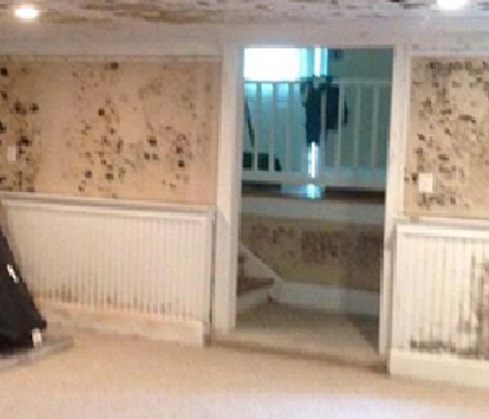 Mold Remediation The Biology of Mold in Alamo Heights, Texas